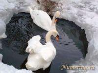 Подробнее: Нумерология отношений: прогноз на февраль 2012 года